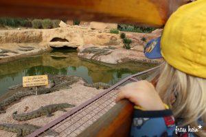 frau hein: Auf der Krokodilfarm in Agadir